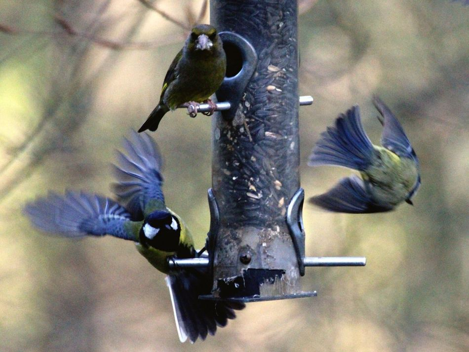 Birds In Flight! Bird Animals In The Wild Animal Themes Spread Wings Animal Wildlife Flying Focus On Foreground Day No People Bird Feeder Mid-air Outdoors Nature One Animal Close-up Beauty In Nature