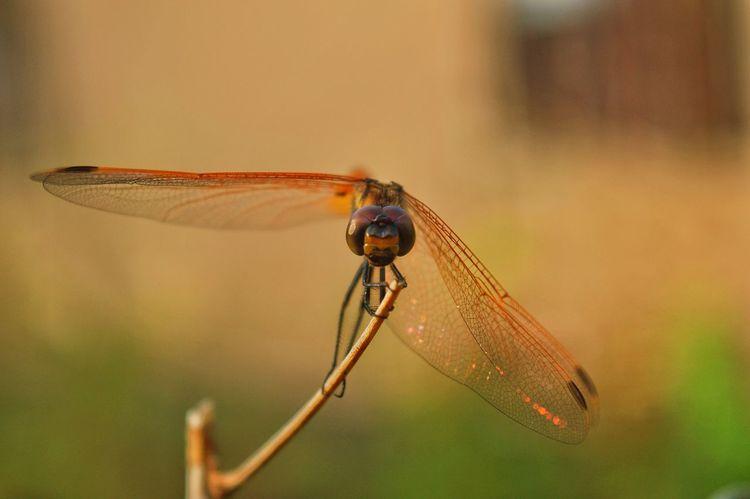 Nikon D3200 Photography