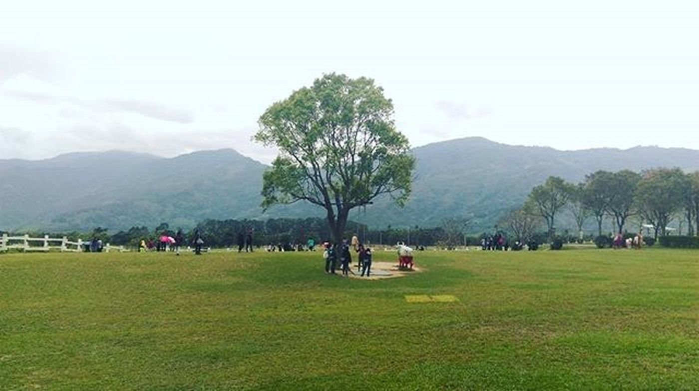 The tree is not alone. We humans are. Taiwan Nature Instadaily Life Environment