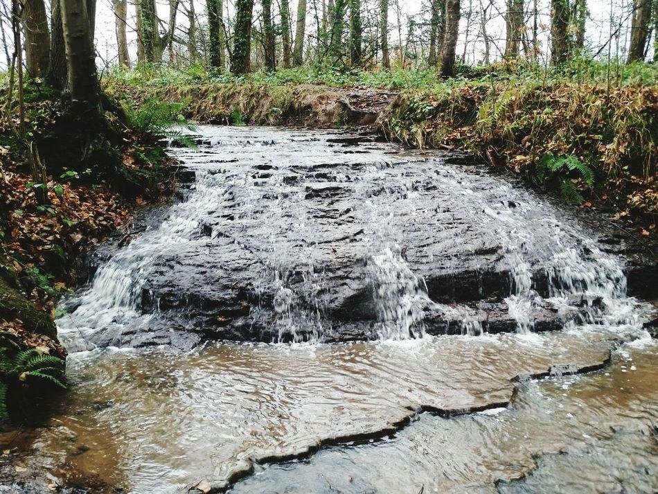 Arrowe Brook Arrowe Park Arrowe Brook Wirral Merseyside Waterfall