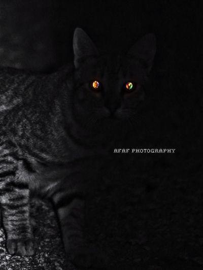 Cat Photo Photography Photographer Cats Canon Cat Eyes