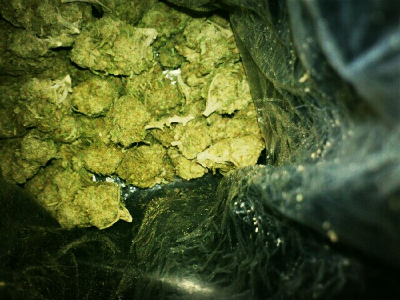 Its day like this that keepah smile on my face an swishers in my life dope!! stupid