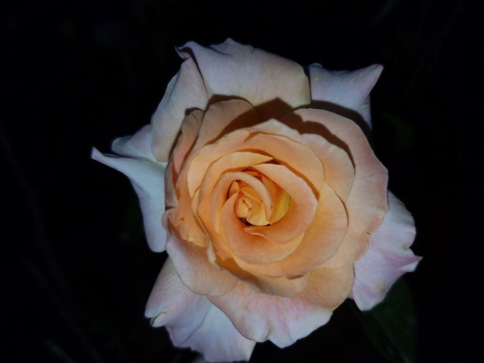 Beatiful Nature Roses Rose Garden Love Nature Love The Colors Relaxing Check This Out Hanging Out Nature_collection Lifes Good