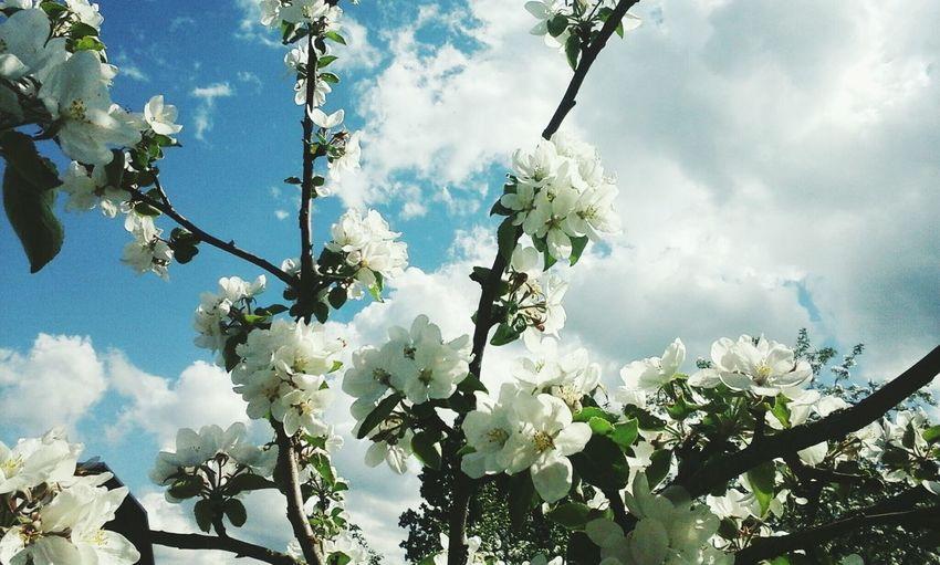 Flowers In Bloom Flowers Spring Spring Flowers