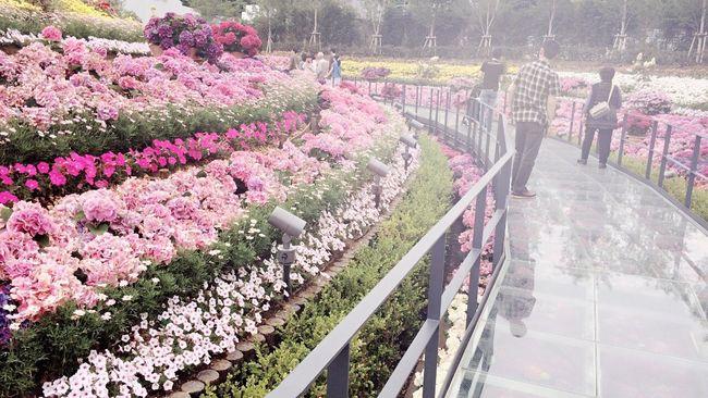ラグーナ 蒲郡 Flower 花 綺麗 幸せ