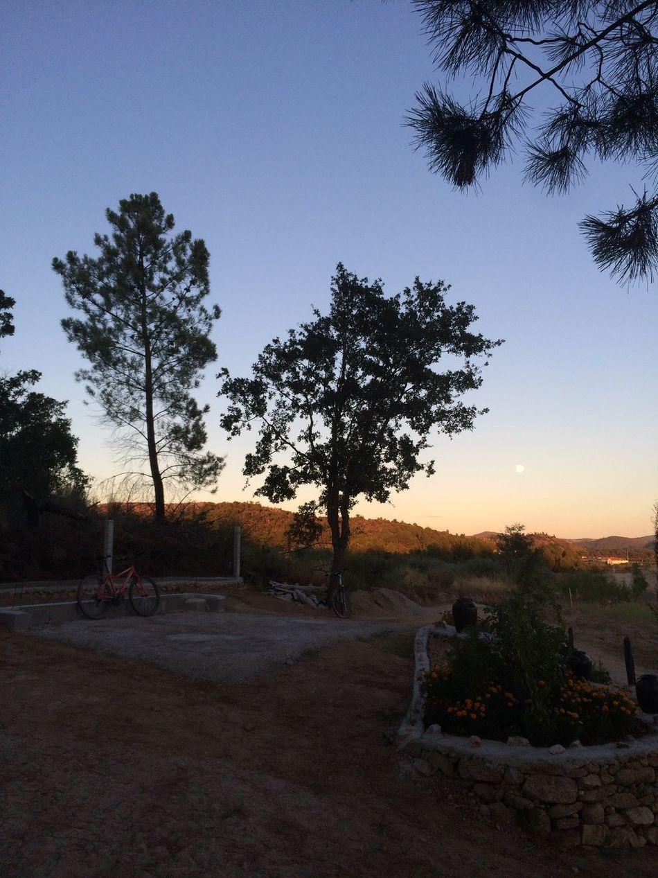 Summer Views Sony A6000 Helios 44-2 Faltaqqcoisa Countrysidesummer