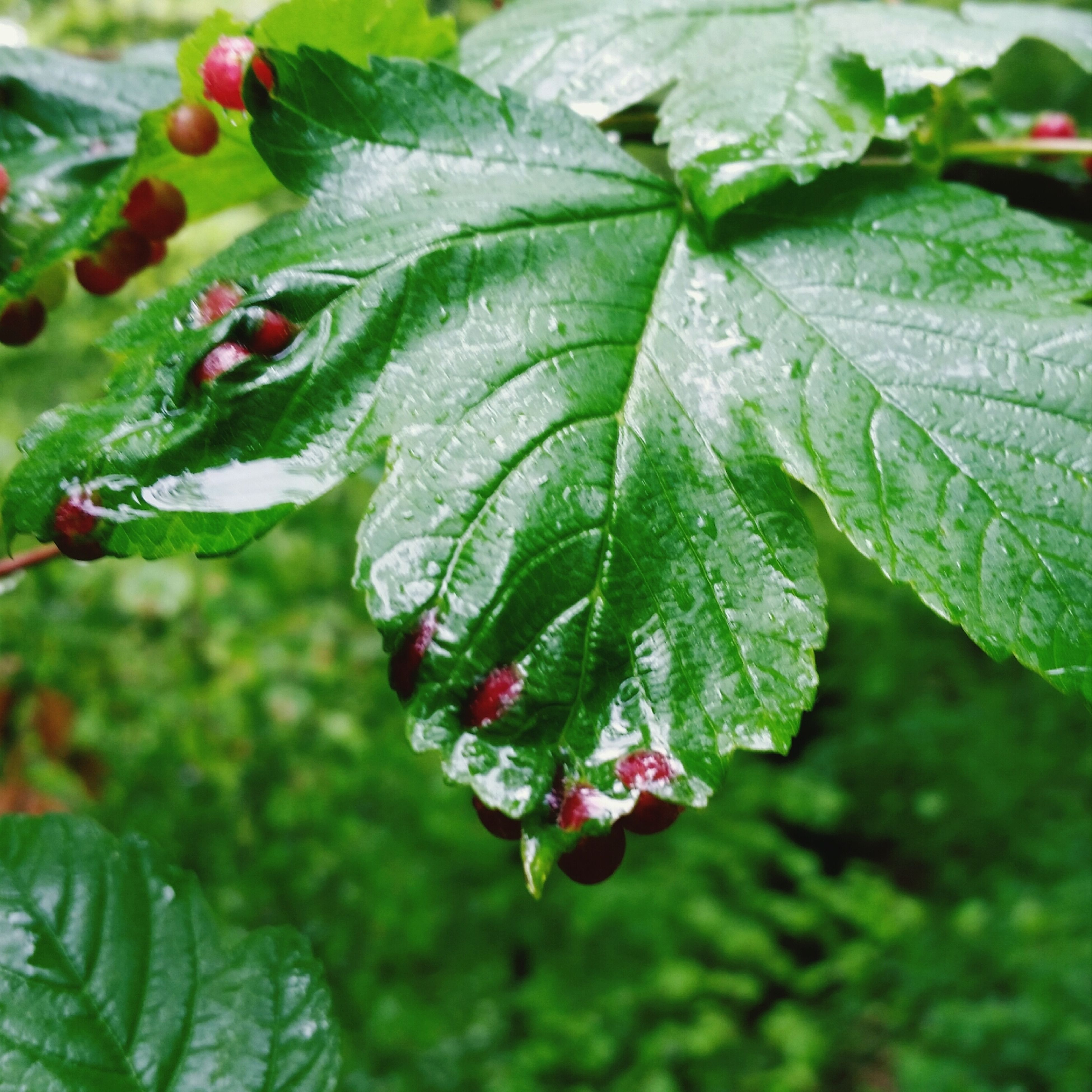 leaf, growth, close-up, freshness, drop, green color, plant, wet, water, nature, beauty in nature, focus on foreground, dew, selective focus, fragility, day, no people, leaf vein, green, red