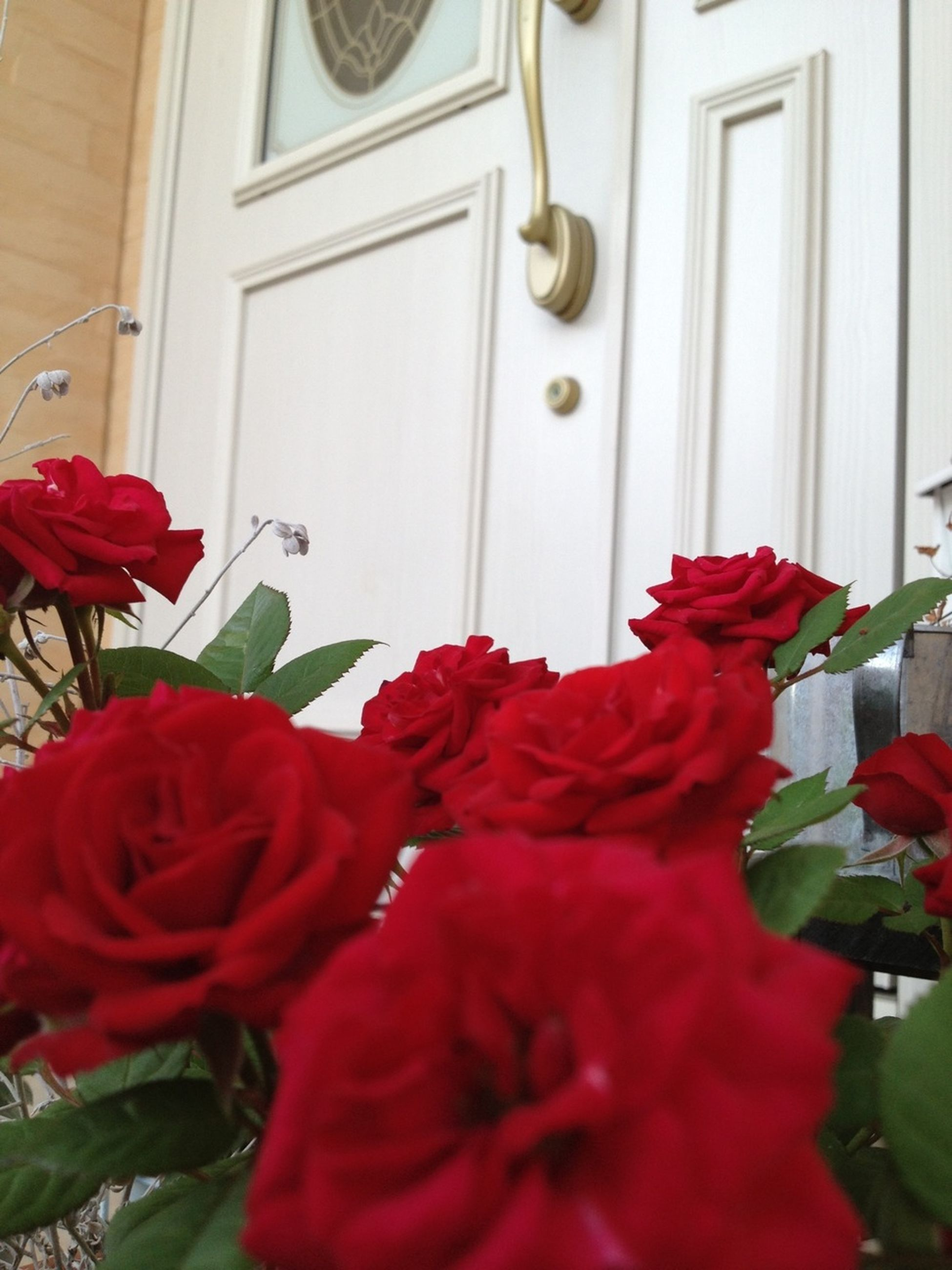 flower, red, petal, fragility, freshness, plant, growth, flower head, leaf, beauty in nature, blooming, nature, built structure, rose - flower, indoors, potted plant, house, door, day, no people