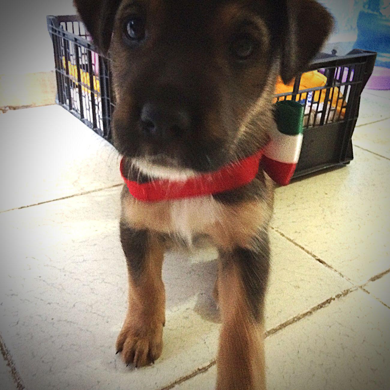 Navi 🐶 Pets Puppy Domestic Animals