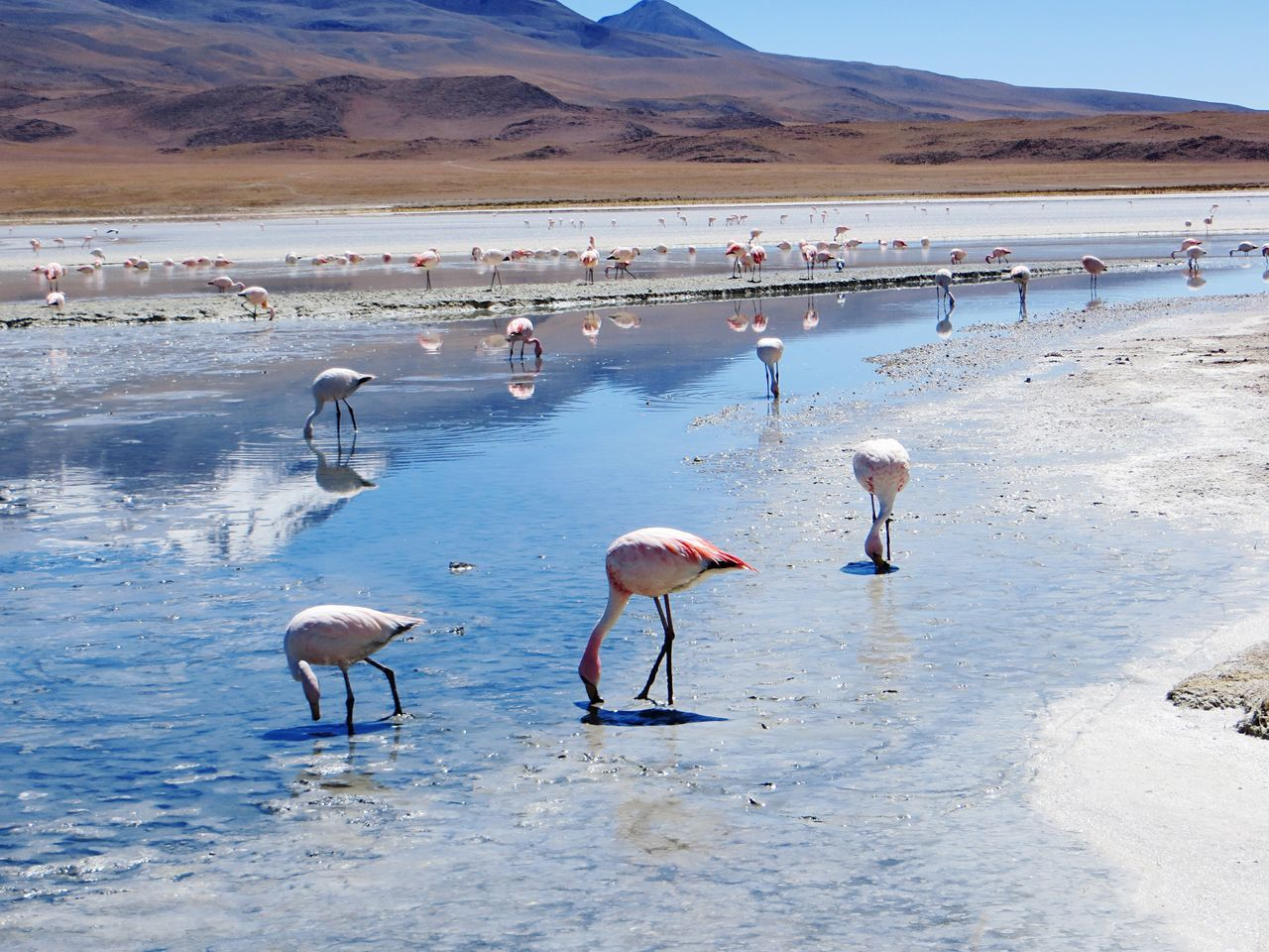 flamingo, animals in the wild, bird, animal themes, large group of animals, nature, animal wildlife, water, reflection, lake, no people, day, outdoors, colony, beauty in nature, scenics, sky