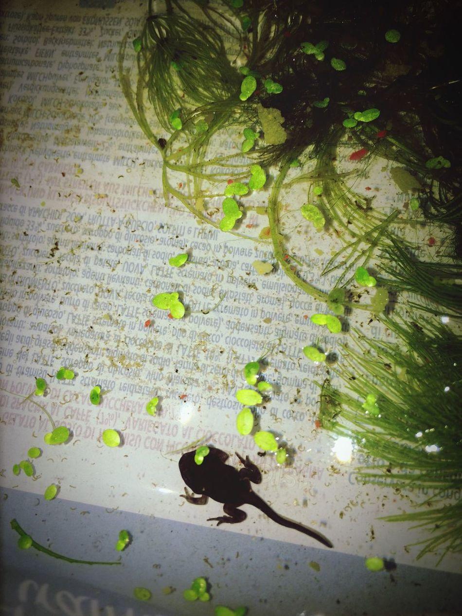 Frog Rana Girino Vita Life Nature IPhone Green First Eyeem Photo