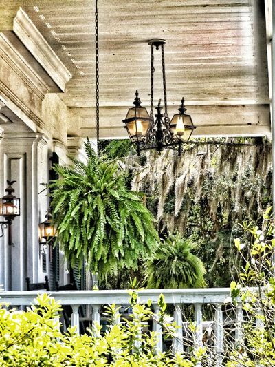 Different Is Better . ❤ Different Angle Different View Different Points Of View Different Perspective Civil War History Historical Building Plantation House Porch Life Porch View Ferns Chandelier Filtered Image Filterphotography