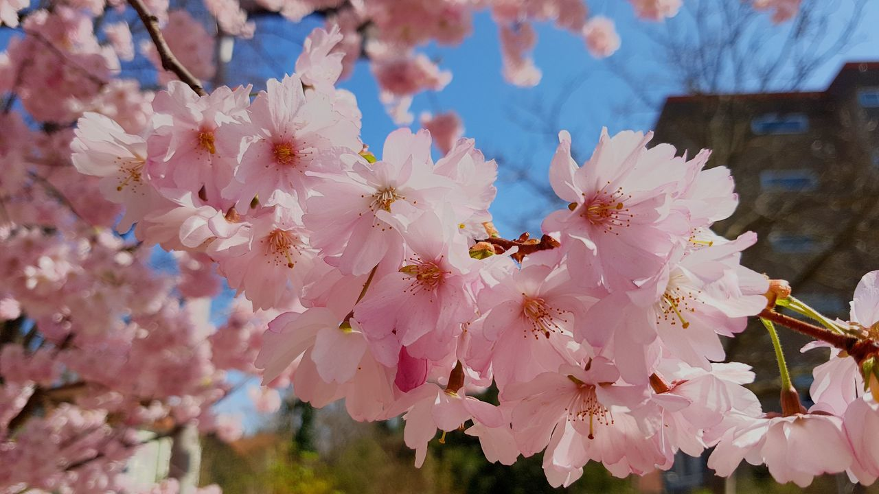 flower, fragility, petal, beauty in nature, nature, growth, blossom, freshness, springtime, flower head, pink color, no people, day, botany, outdoors, close-up, tree, stamen, branch, pollen, plant, animal themes, one animal, blooming