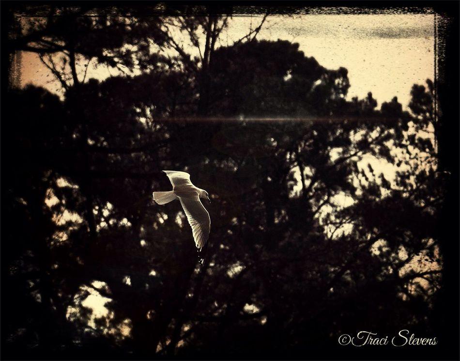 EyeEm Nature Lover EyeEm Best Shots - Nature EyeEm Best Edits Impossible Moments