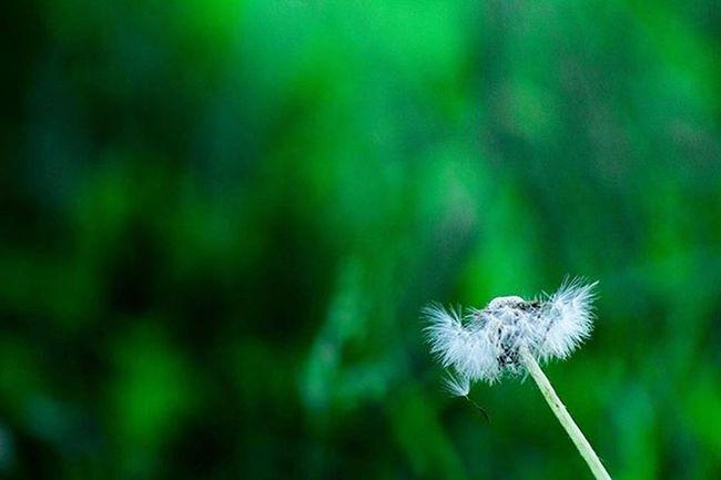 Survive Canon T5 Landscape_lovers Landscape Flowers Green Lion 300mm Piggysvacation Family Photographer Lr5 Puppyedition