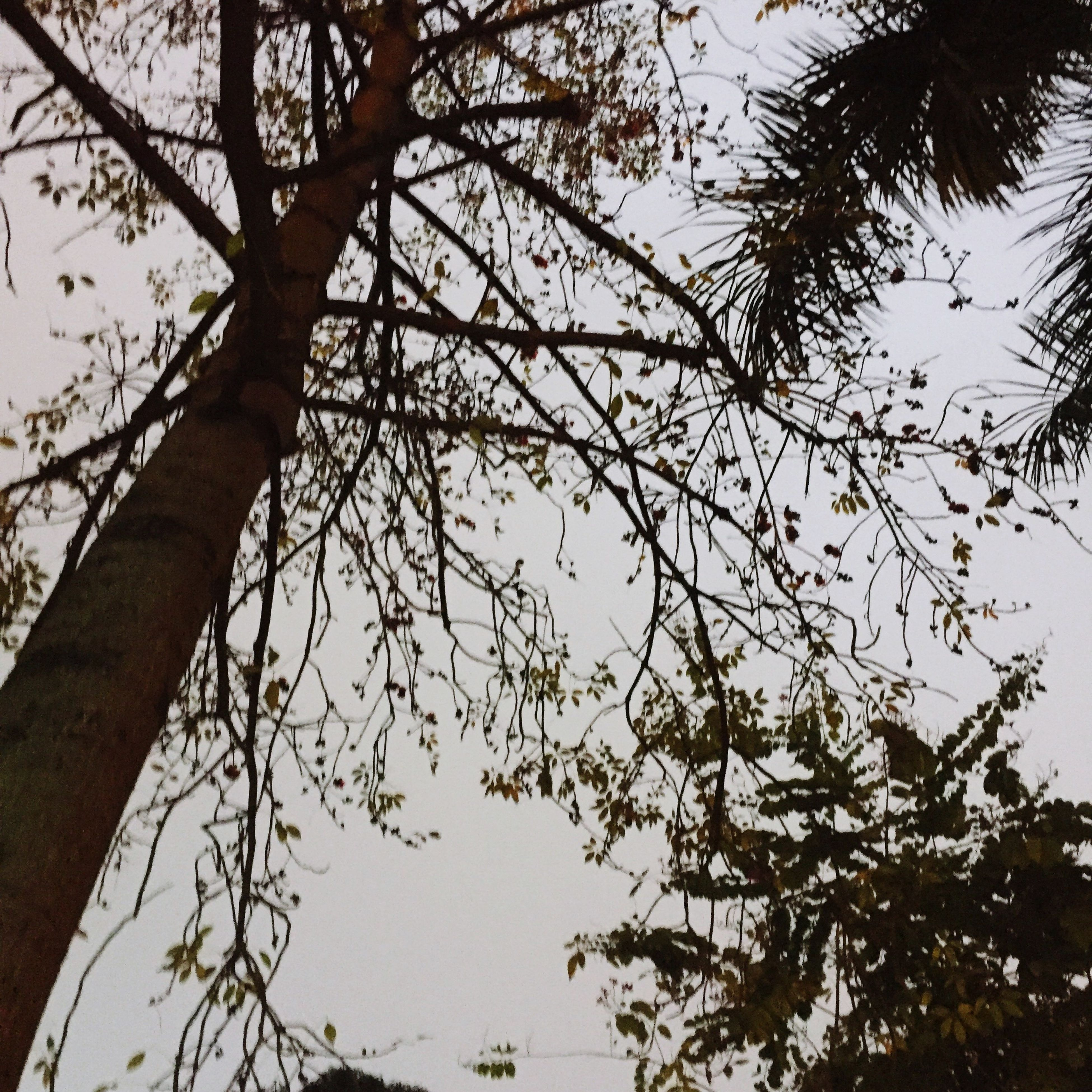 tree, low angle view, nature, sky, no people, outdoors, branch, beauty in nature, day, close-up