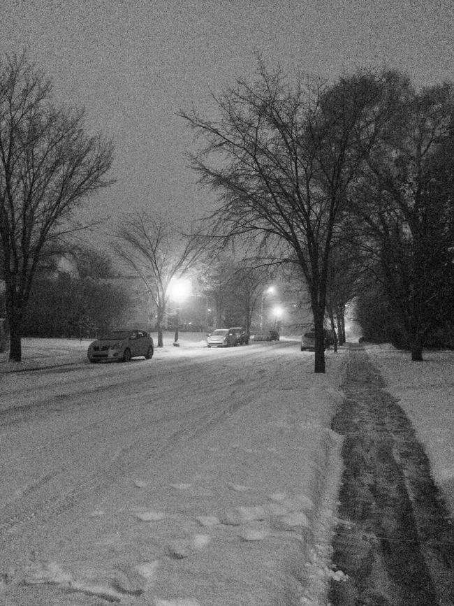 Snow Fog Early Morning Blackandwhite