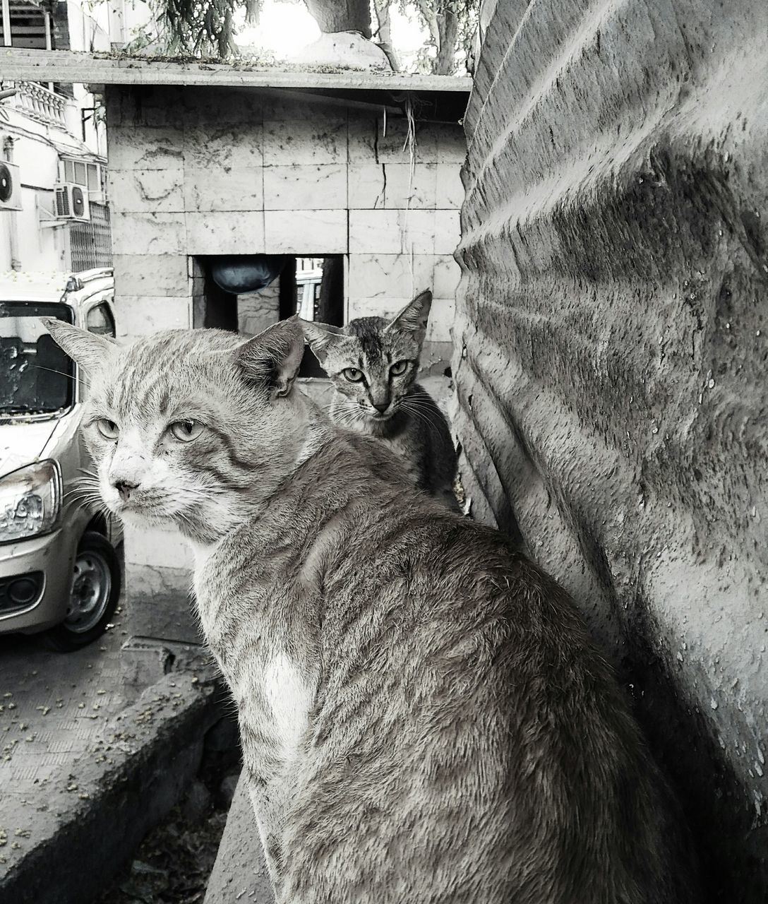 domestic animals, mammal, domestic cat, animal themes, pets, no people, one animal, feline, day, built structure, outdoors, architecture, close-up