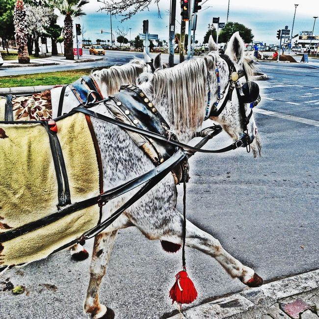 HDR Hdrphotography Hdr Edit Horse Edit Eye4photography  Streamzoofamily Vscocam EyeEm Best Edits Eyeemphotography VSCO