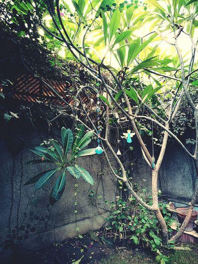 Landscape Garden Tree Grass Plants 🌱 Dangly Charms Cairo