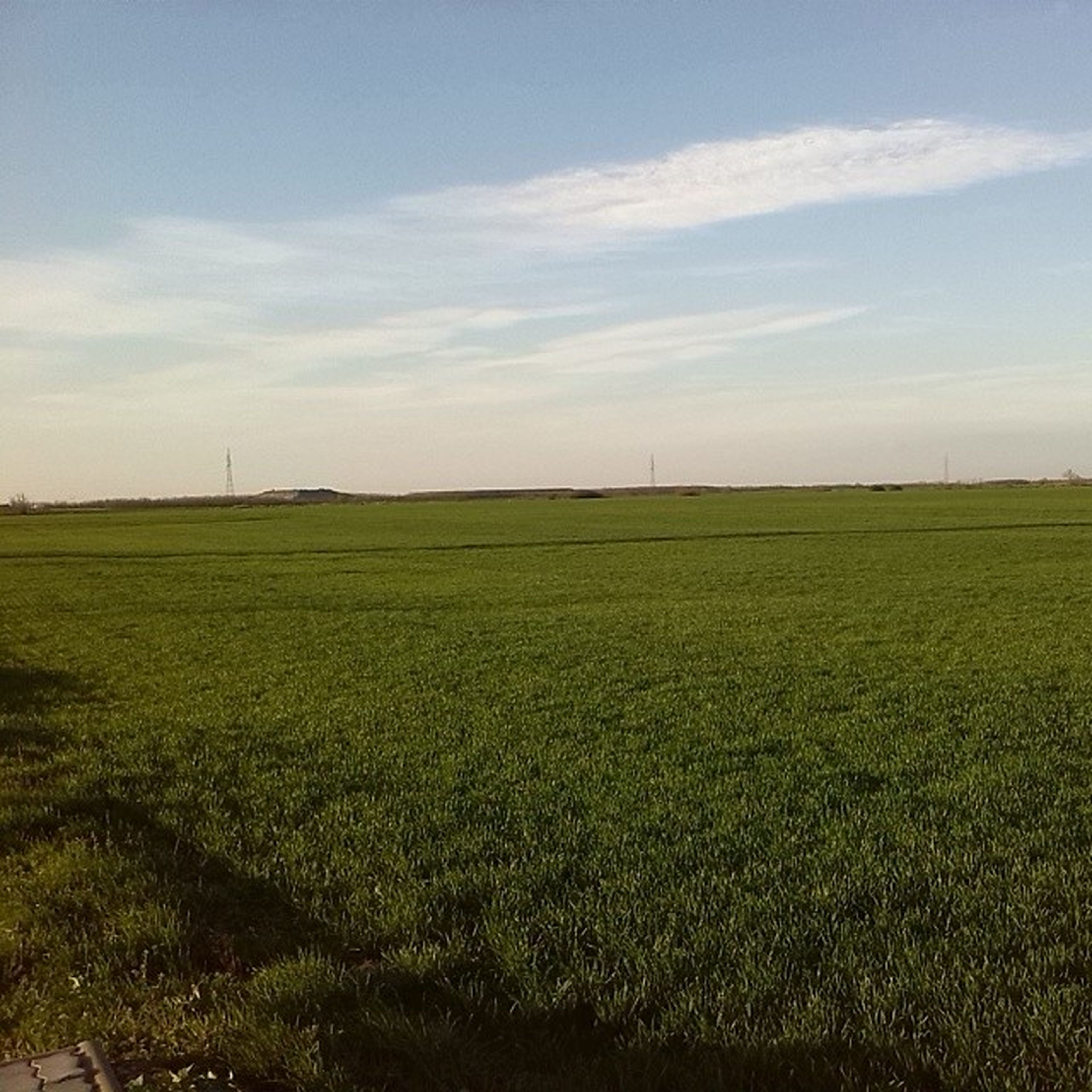 field, landscape, tranquil scene, tranquility, sky, rural scene, grass, agriculture, scenics, beauty in nature, nature, farm, growth, green color, cloud - sky, horizon over land, grassy, crop, cloud, cultivated land