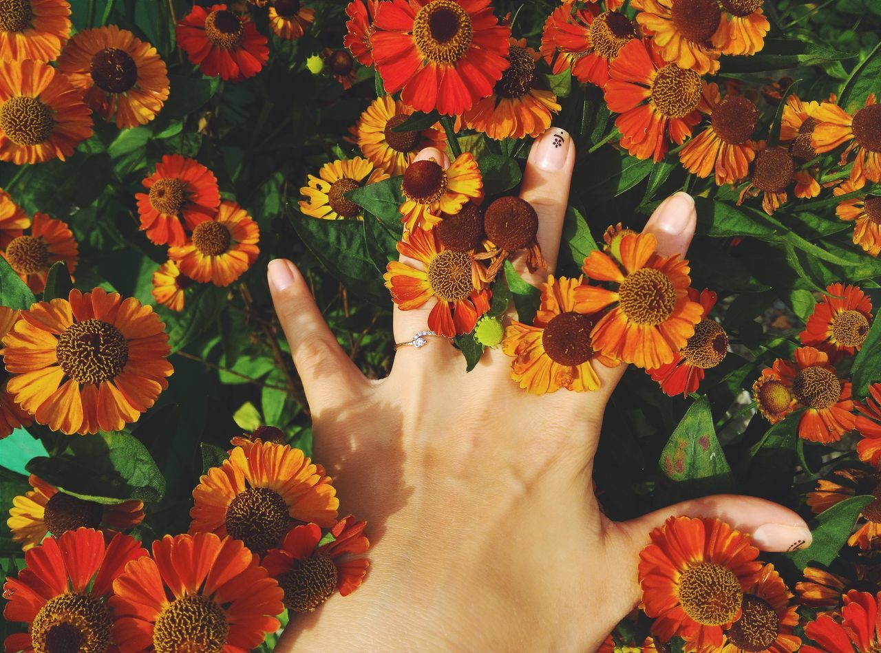 Close-Up Of Female Hand Amidst Flowers