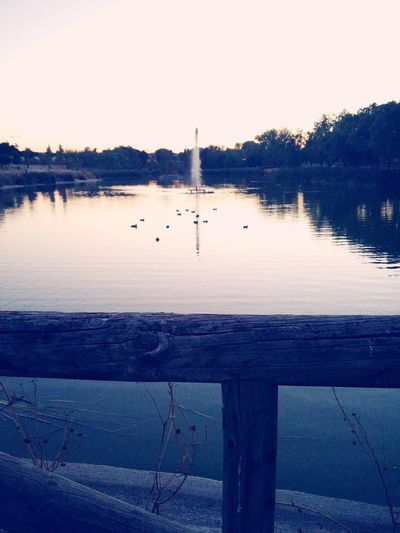 Water Water Bird Estanque Ave Acuatica Duck DuckDuckGo Pato Patos Sunset Anochecer Wood Madera Barandilla Balustrade Animal In The City Animales En La Ciudad