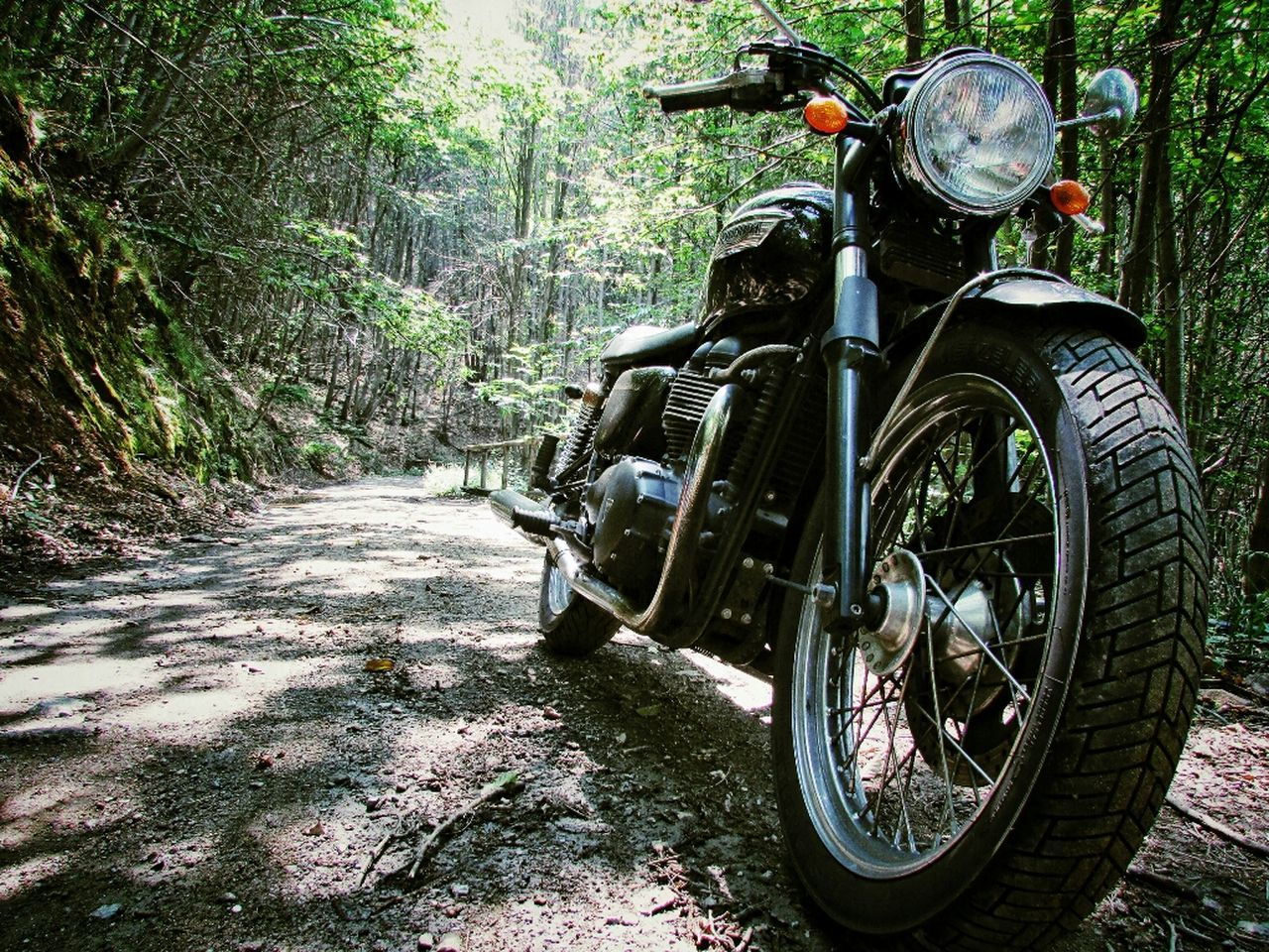 Beautiful stock photos of motorcycle, Day, Dirt, Dirt Road, Forest