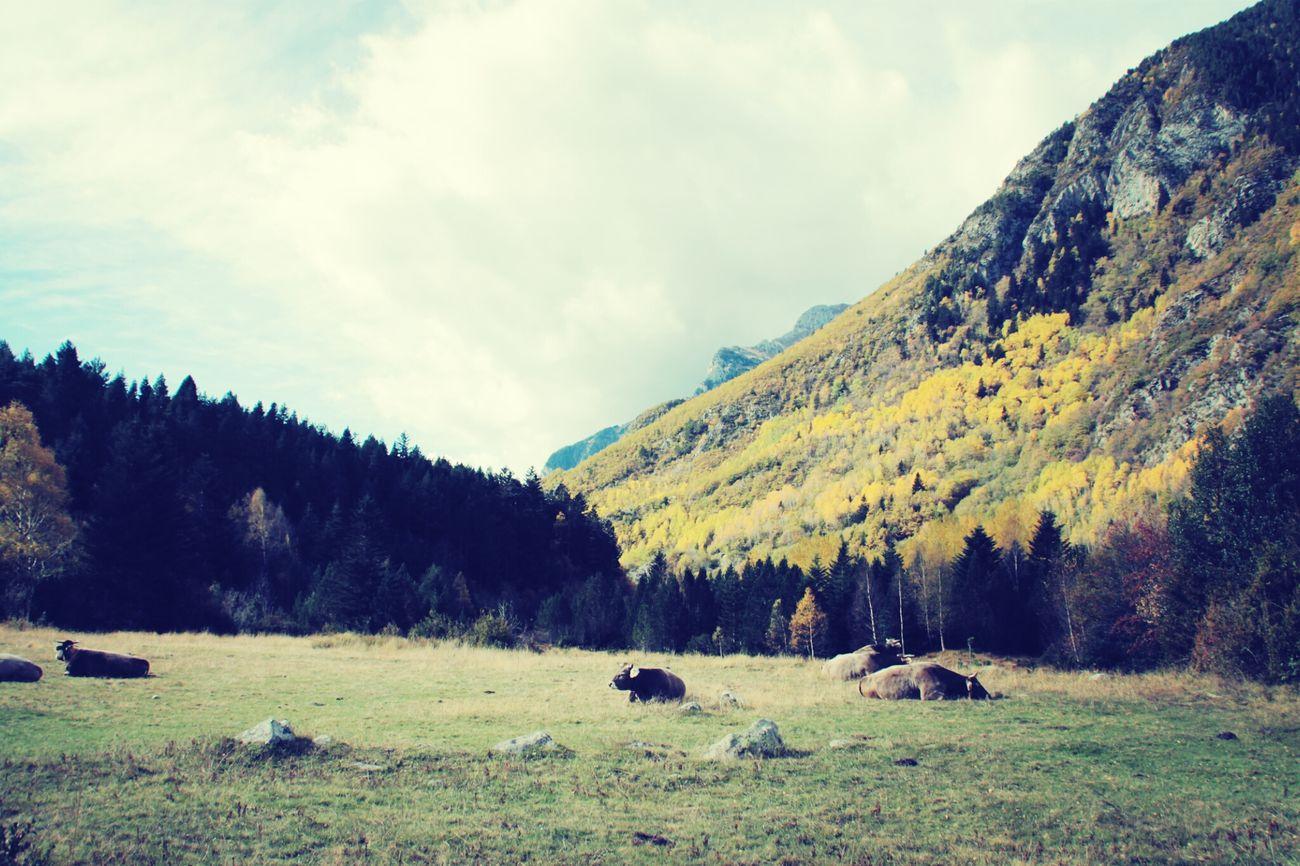 En el valle... Benasque Valle De Benasque Huesca
