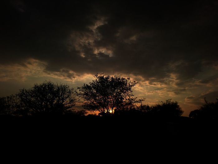 Dramatic sky at sunset Tree Silhouette Sunset Sky Nature Tree Area No People Beauty In Nature Outdoors Dramatic Sky Tranquil Scene Tranquility Scenics Cloud - Sky The Great Outdoors - 2017 EyeEm Awards EyeEmNewHere Sun Sun Behind The Tree No Filter/no Edit Sommergefühle Let's Go. Together. EyeEm Selects Mix Yourself A Good Time The Week On EyeEm Paint The Town Yellow Perspectives On Nature