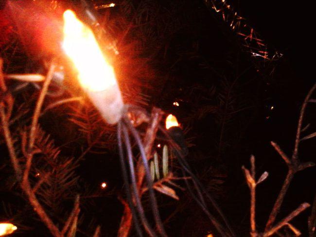 Christmas Lights Christmas Tree Merry Christmas! ChristmadHome :)