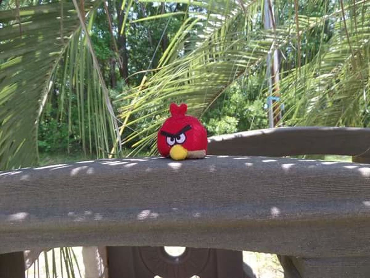 toy, red, no people, day, tree, stuffed toy, outdoors, close-up, bird, animal themes