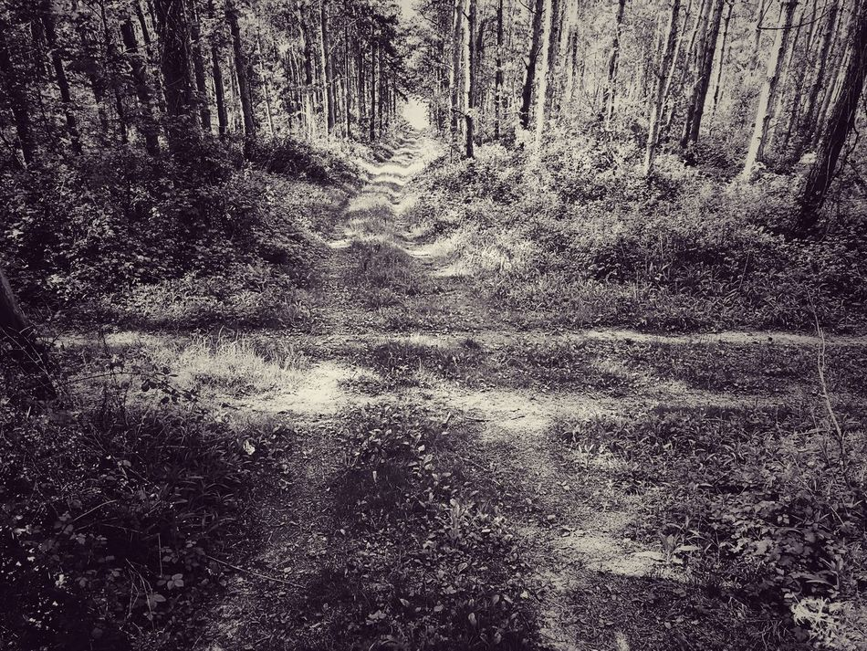 Crossroads No People Tree Growth Nature Black & White Blackandwhite Nature Photography