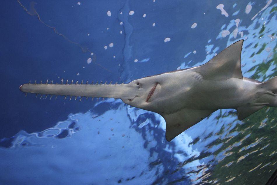 Beautiful stock photos of fish, Animal Themes, Blue, Close-Up, Fish