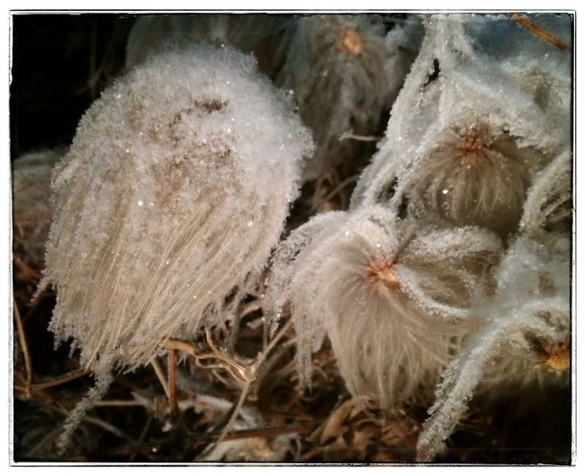 Evening frost. Photo Of The Day Photography Iphone 5 Frost Flowers Winter