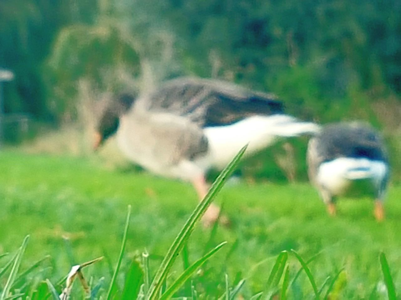 grass, field, animal themes, nature, day, growth, green color, one animal, outdoors, no people, domestic animals, grass area, beauty in nature, animals in the wild, mammal, landscape, bird, close-up