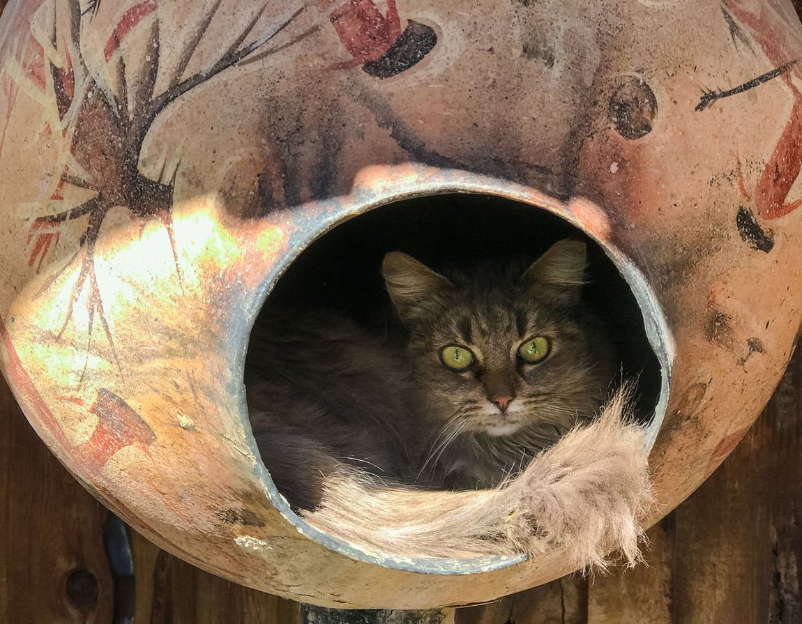 Cat in a Pot Animal Themes Close-up Domestic Animals Domestic Cat Feline Looking At Camera Mammal No People One Animal Pets Portrait Pot Whisker