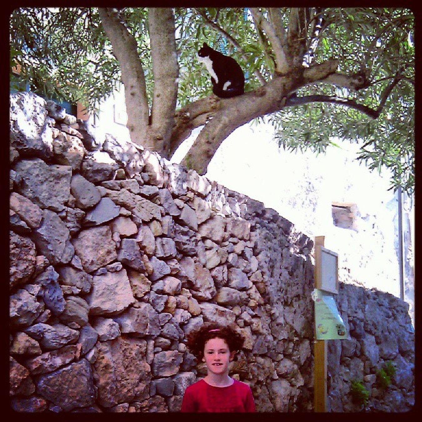 Cat Bewarethecat Daughter Verezzi borgo borgioverezzi Laura