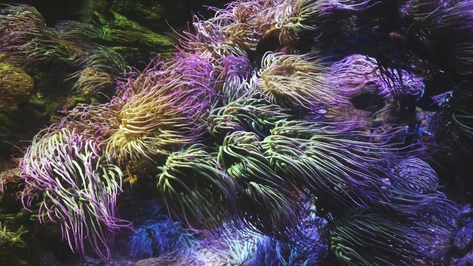 Sea Life Nature Aquarium London Mystical Elegant Majestic Life Beautiful Sealife Deep Purple