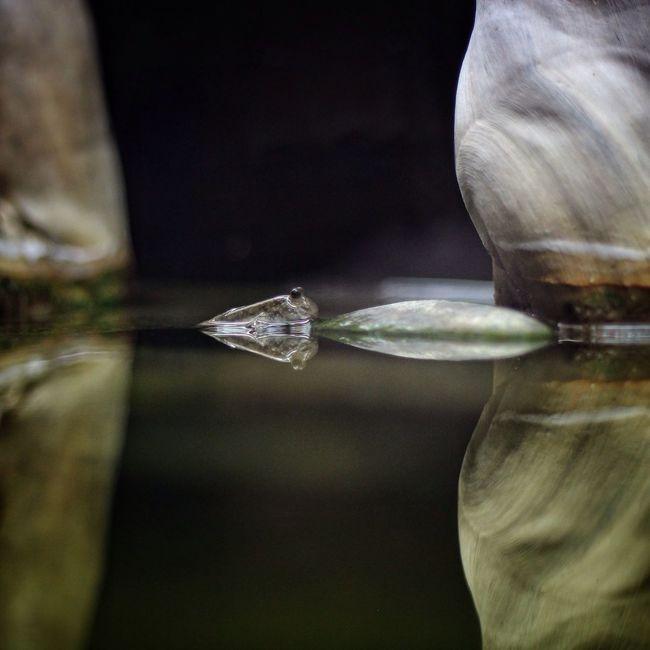Shooting Fish In A Barrel Fish Aquarium Mudskipper
