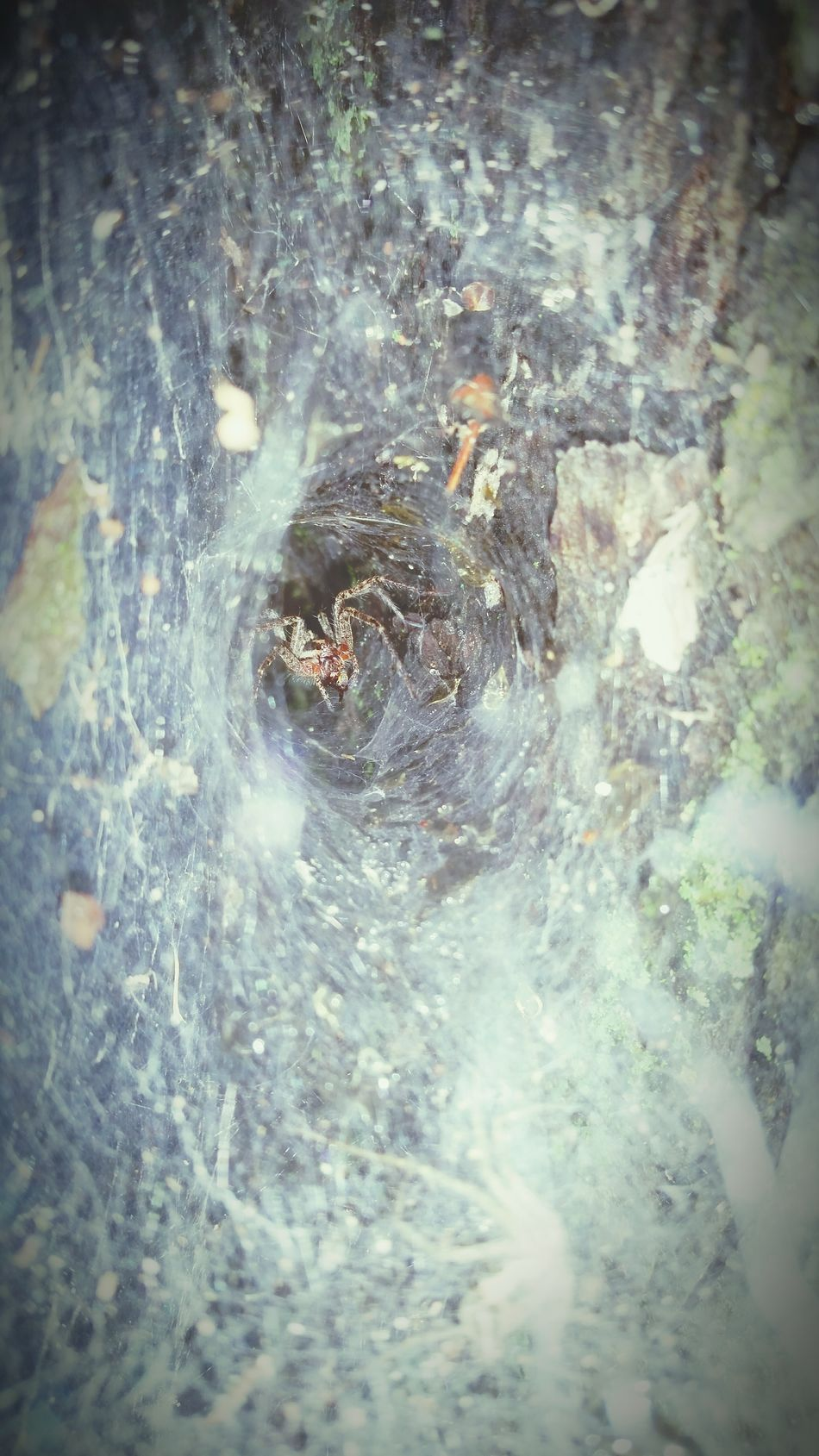 Spider in its nest Art Nature Life Water_collection Spiderweb Spider Web, Dew, Morning, Spiders Captured Moment Spider Web Tunnel