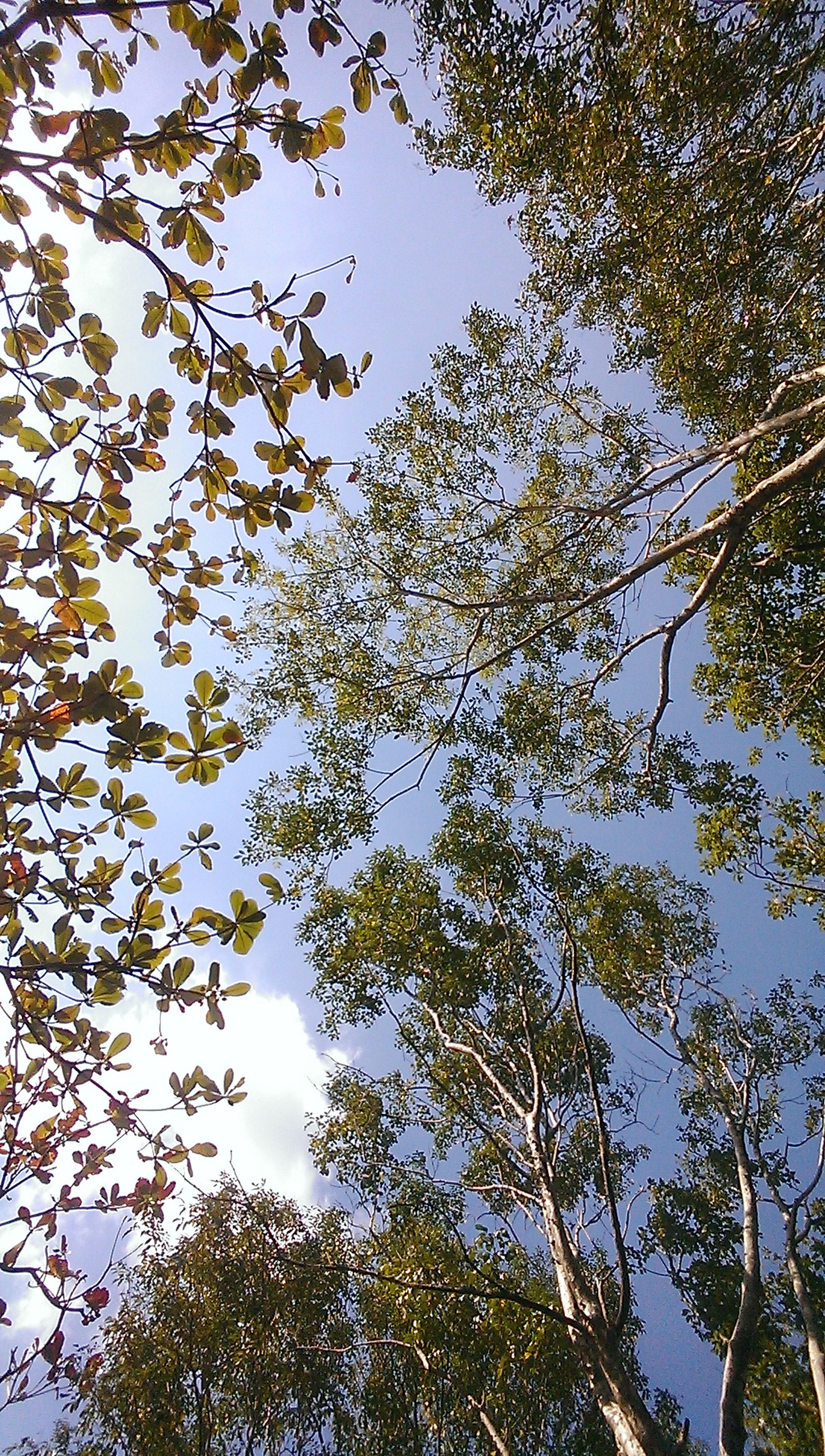 low angle view, tree, branch, growth, sky, nature, clear sky, leaf, day, outdoors, beauty in nature, built structure, no people, high section, architecture, building exterior, treetop, tranquility, directly below, sunlight