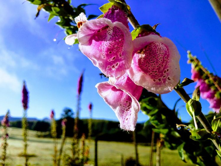 Flowers Green Life Australian Landscape Australian Bushland EyeEmNewHere GALAXY S4