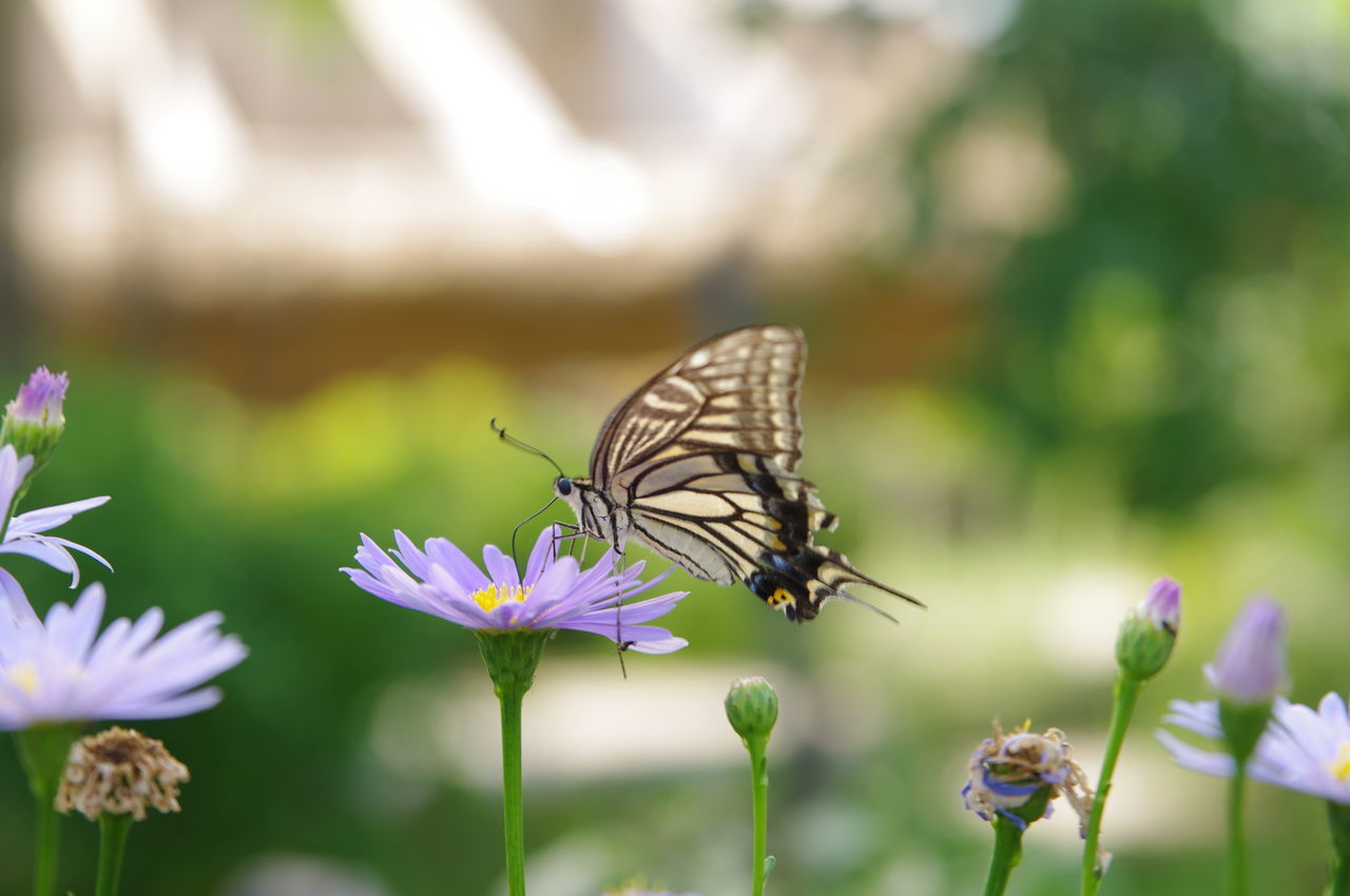 animal themes, animals in the wild, one animal, insect, flower, animal wildlife, nature, focus on foreground, day, plant, fragility, no people, butterfly - insect, beauty in nature, outdoors, close-up, growth, freshness, pollination, spread wings, flower head, perching