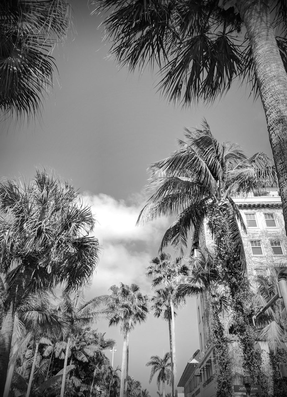 palm tree, tree, low angle view, sky, tree trunk, no people, growth, nature, outdoors, palm frond, built structure, day, beauty in nature, architecture, branch, building exterior