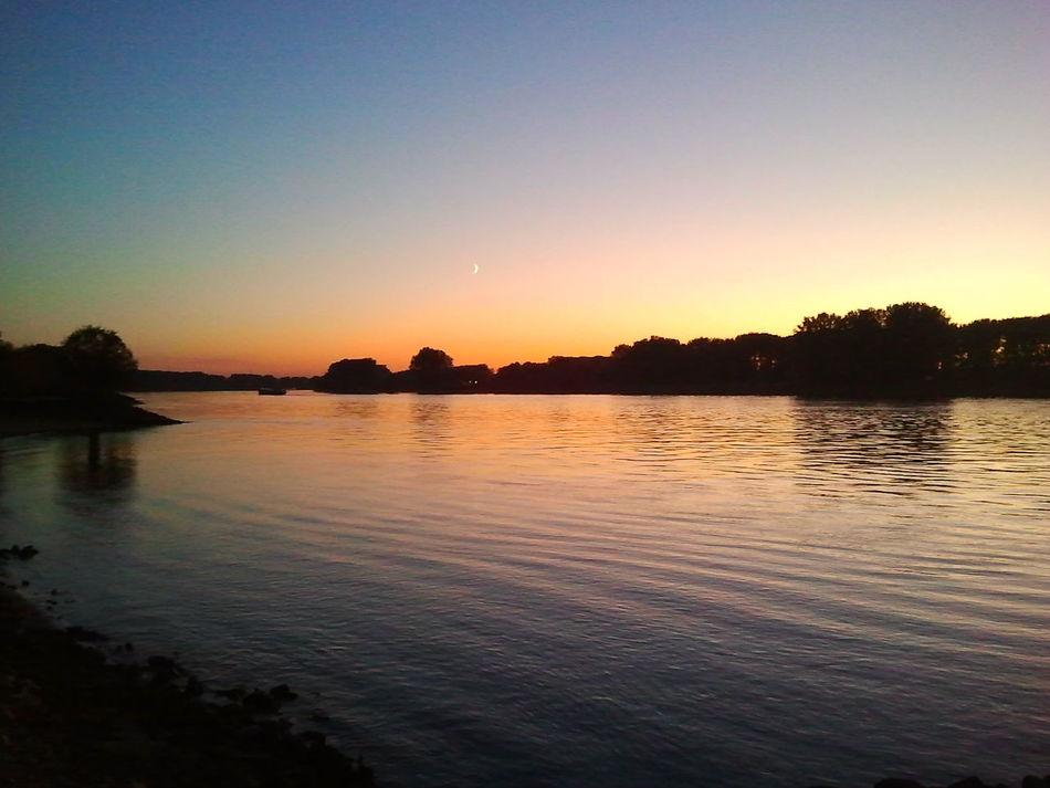 River Riverside No Filter Sunset Rhine Moon Nature Trees Germany Gernsheim Sky Sonnenuntergang