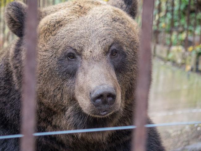 Animal Animal Head  Animal Portrait Bear Cage Castlemoat Eyes Looking At Camera Sad Wildlife Wisdom