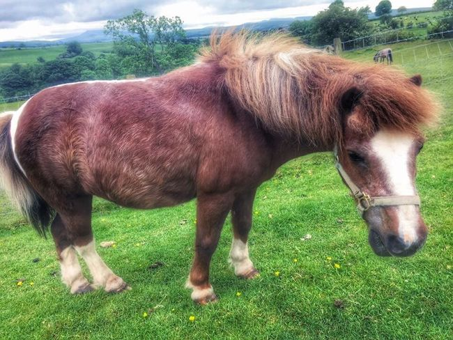 Animals Nature Animals Castle Grounds Friendly Animals Horses.. Nature On Your Doorstep Landscape Horse Photography  Horse Horselove