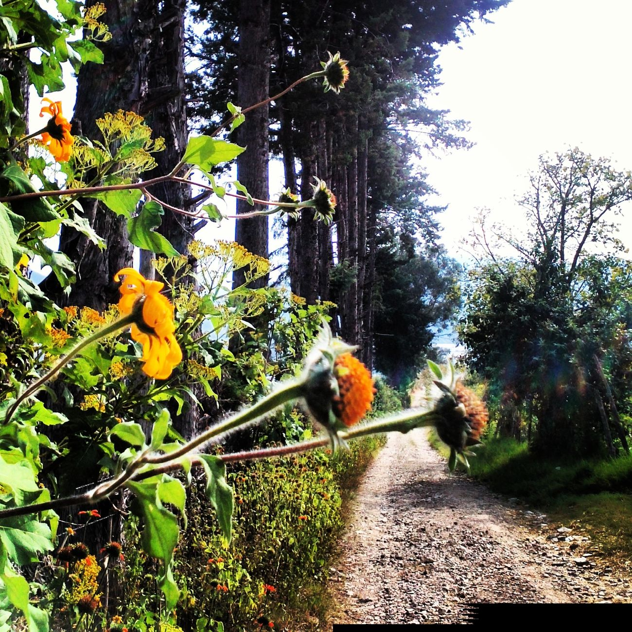 Photo Natural Mexico De Mis Amores Mexico Y Su Naturaleza