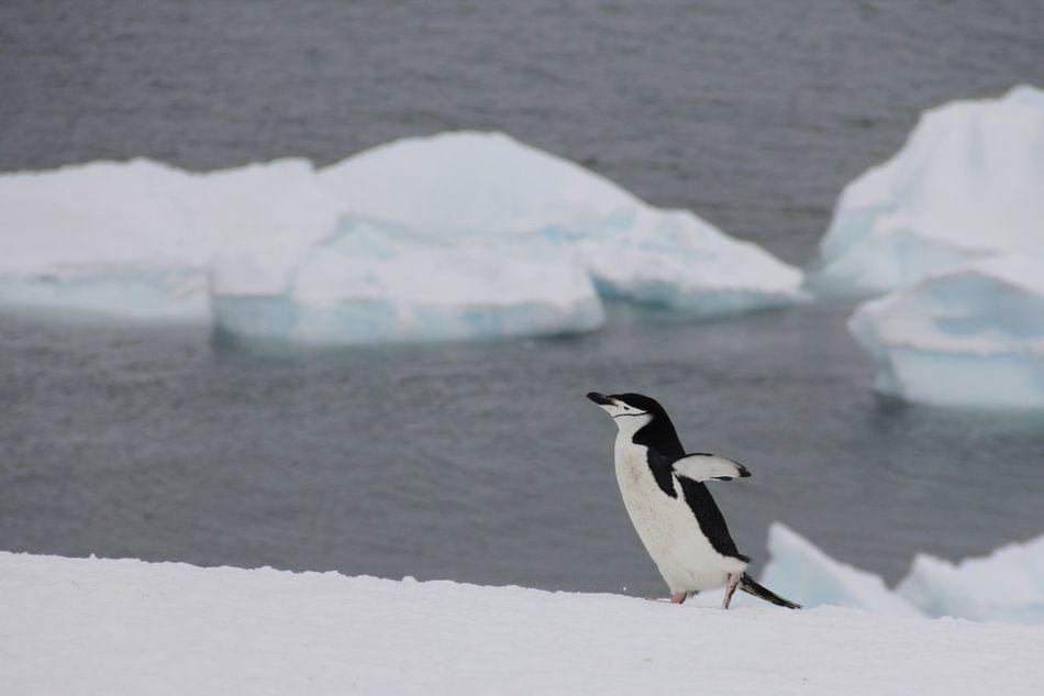 Beautiful stock photos of vogel, Horizontal Image, animal themes, animals in the wild, bird